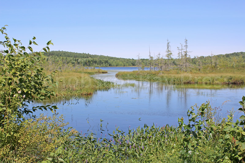 CP_Pierce_Pond_082417_ML.jpg