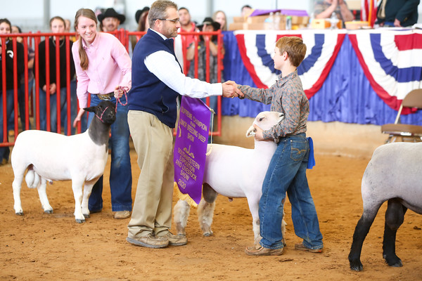 Junior Breeding Sheep Show