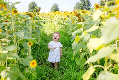 Windsor Castle Park Sunflowers