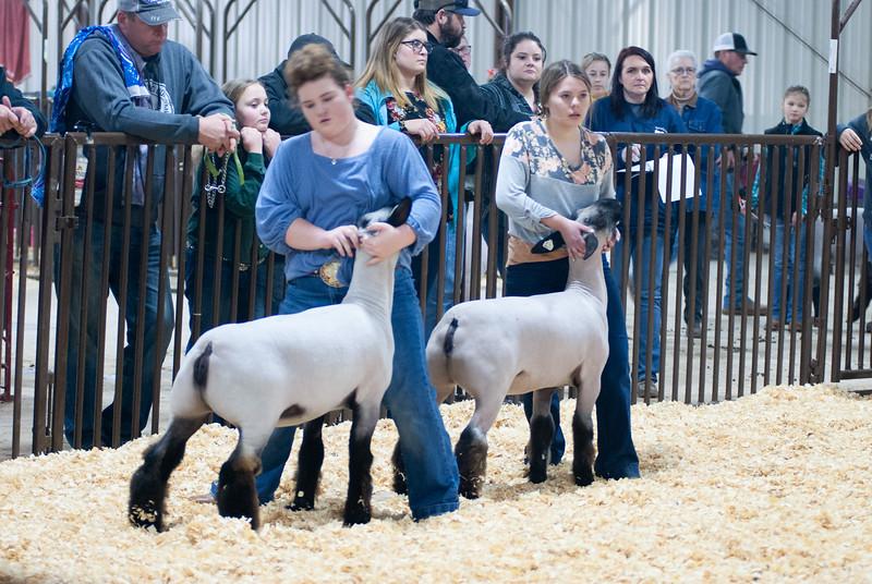 kay_county_showdown_sheep_20191207-91.jpg