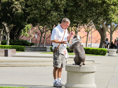 LA Coliseum Dog Training July 1 2012
