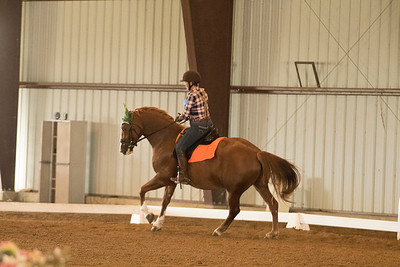 Horse 530