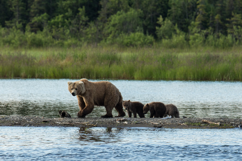 Katmai Bears-5.jpg