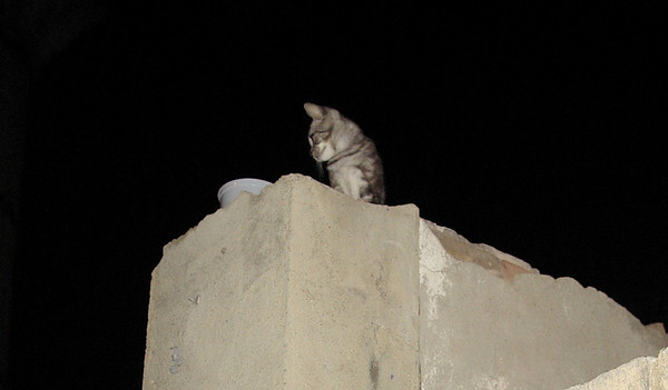 High Wall Kitten Oct 3rd., 2011