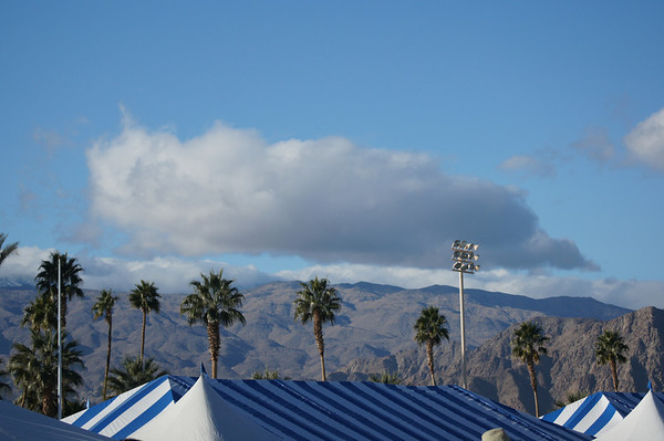 Palm Springs Kennel Club Kerries day two