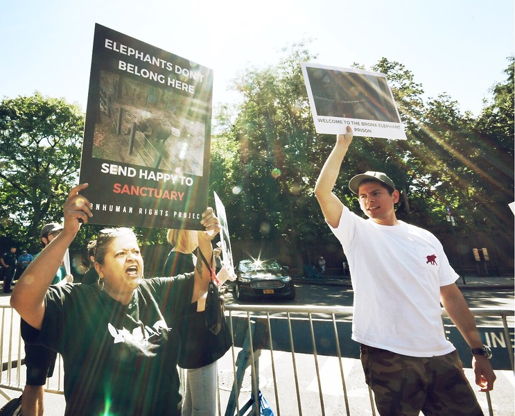 """Nonhuman Rights Project presents the: """"Rally for Freedom for Happy"""" on August 10, 2019 at the Bronx Zoo in New York City."""