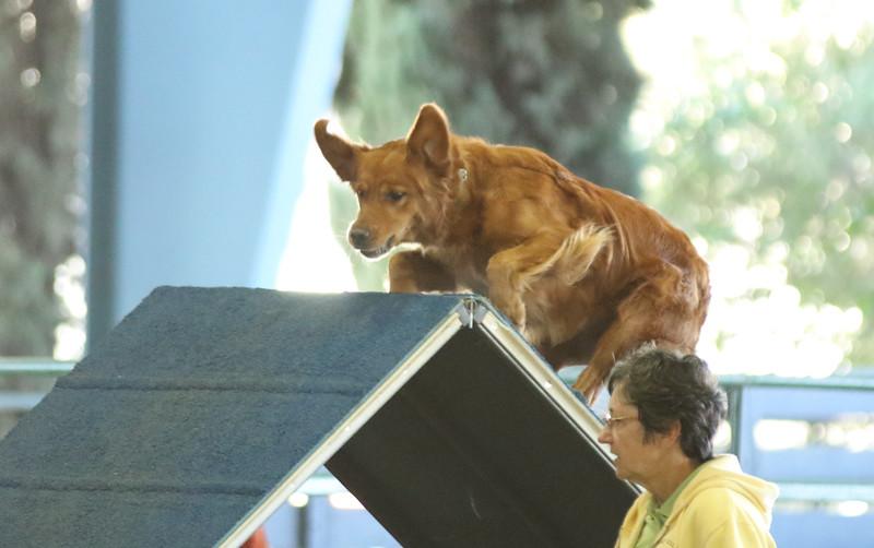 10-31-2015 Border Terrier-2401.jpg