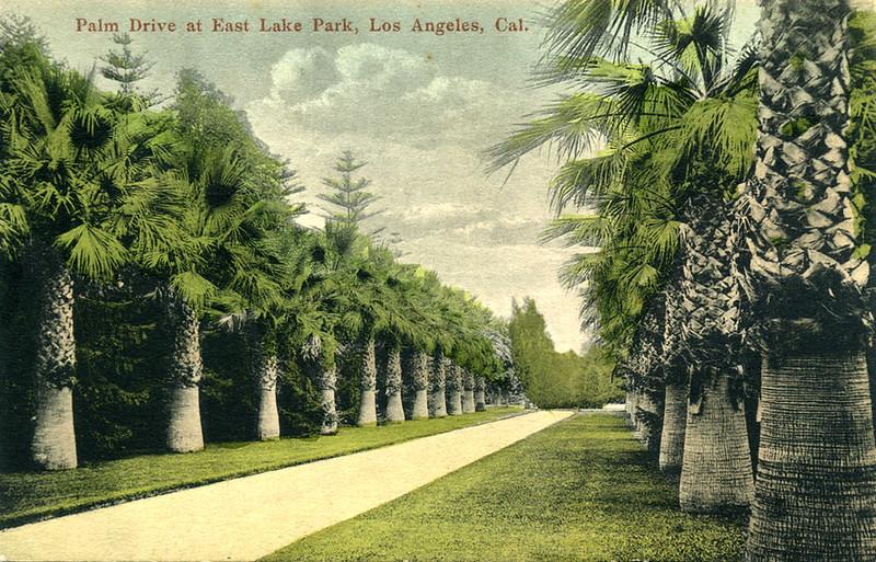 Palm Drive at East Lake Park