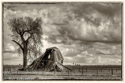 A Vanishing Breed - Old Milking Barn