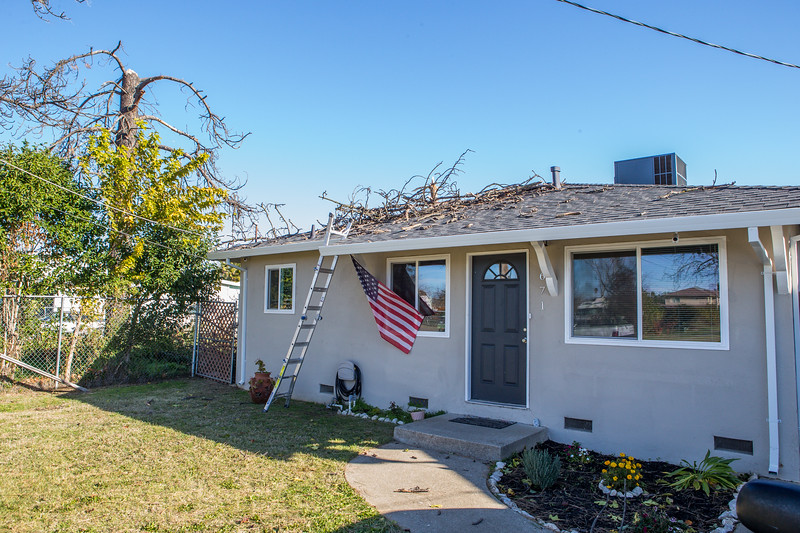 5671 Wallace Ave - Tree 1030am 12 16 2017 Extremly Windy Conditions-3.jpg