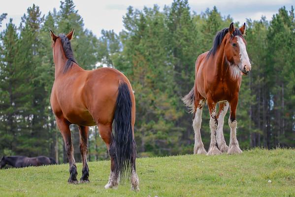 9-21-16 *A few horses at  Free Spirit Sanctuary