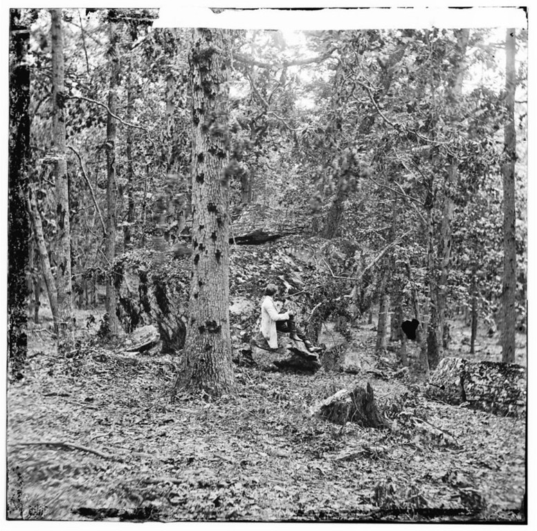 . Gettysburg, Pennsylvania. Battered trees on Culp\'s Hill  - Library of Congress Prints and Photographs Division Washington, D.C.