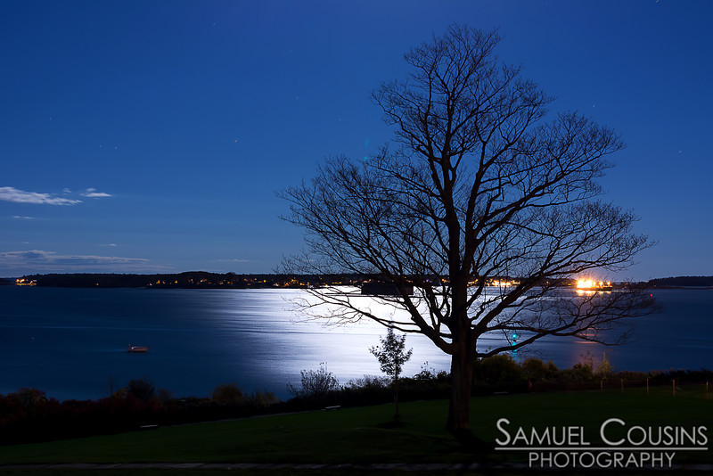 The large tree in Fort Allen Park, with the moonlight reflecting off the bay in the background.