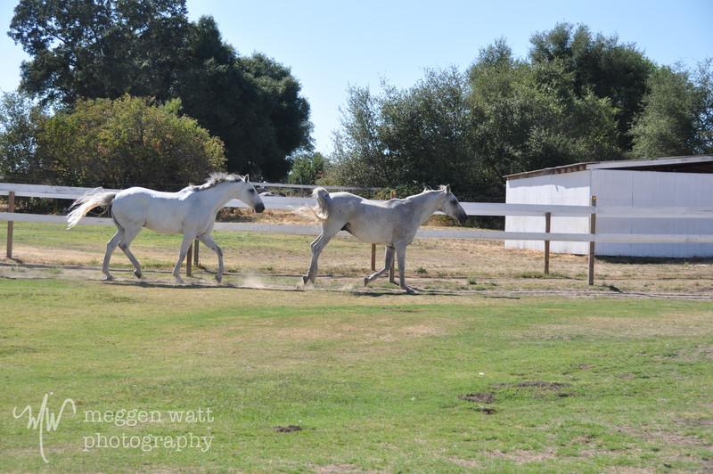 EB&Horses-122.jpg