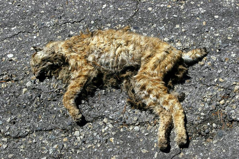 Roadkill. Sorry if this grosses you out, but it was the only wildlife, save a few birds, that I saw... Flat as a pancake and light as a feather. This poor bugger would have blown down the road in a stiff breeze it was so dried up.