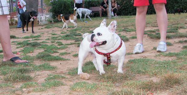 06  -  07  -  2010 Ayora Dog Park
