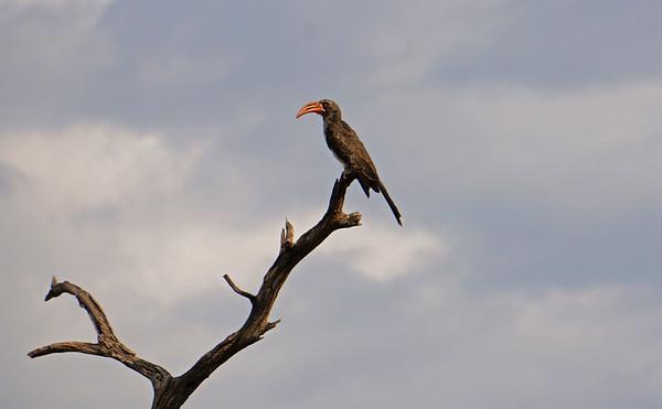 Kwai Chobe Botswana