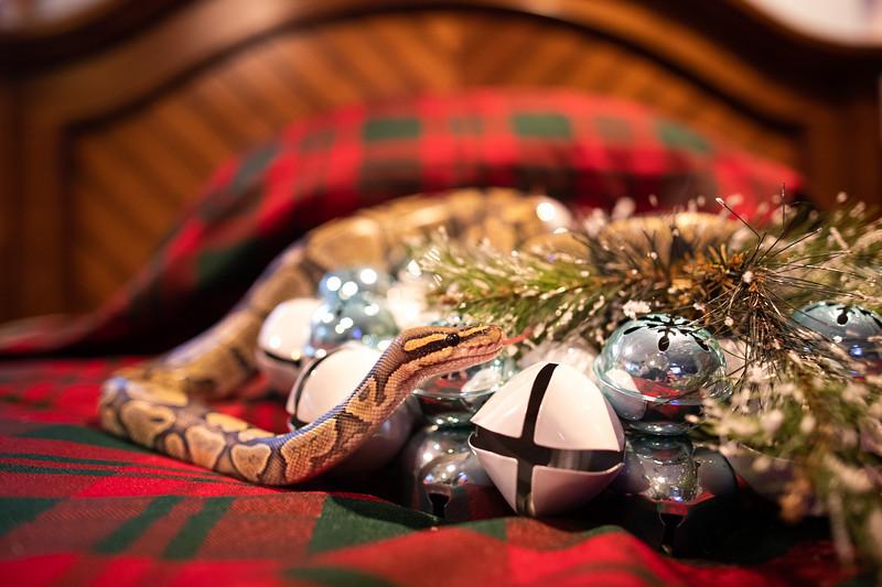 ChristmasSnakes19_0032.jpg