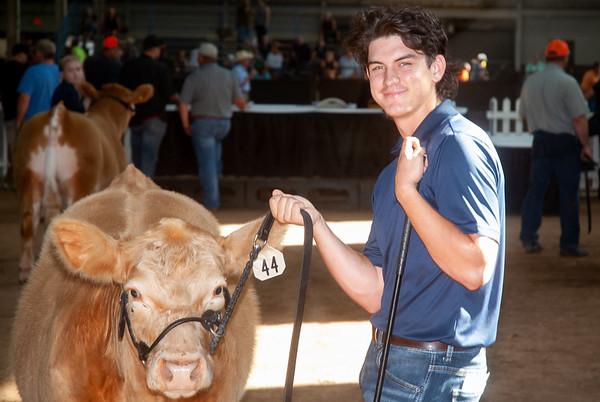 OK State Fair Cattle