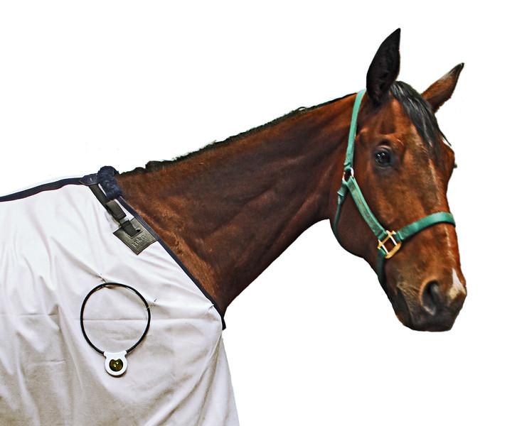 HorseShldrLoop_R.jpg