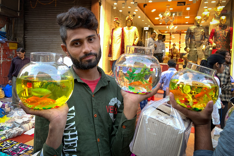 Selling aquariums on the street in New Delhi