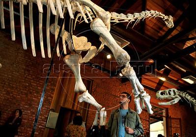 Brazilian dinosaur
