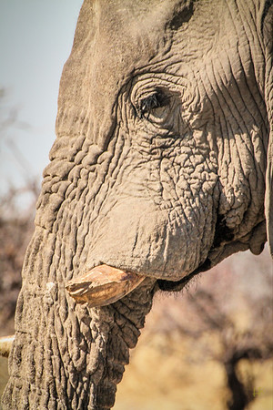 Hilla's photos of Northern Namibia & Okavango