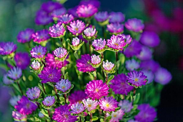 """Les fleurs de la """"Cueillette de la Bernardière"""""""