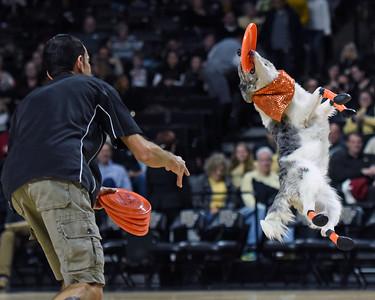 Flying Houndz Frizbee Dogs 2016
