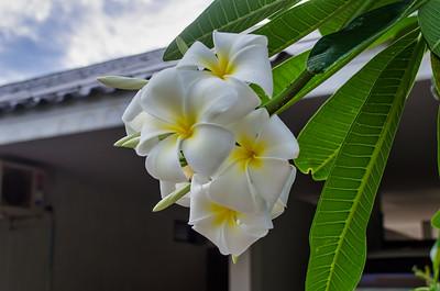 Lidt blomster