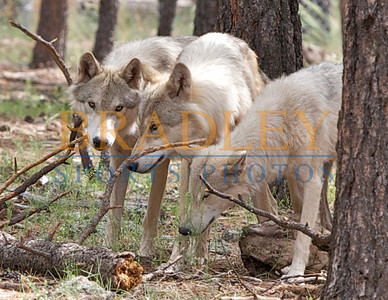 Animals of the Southwest