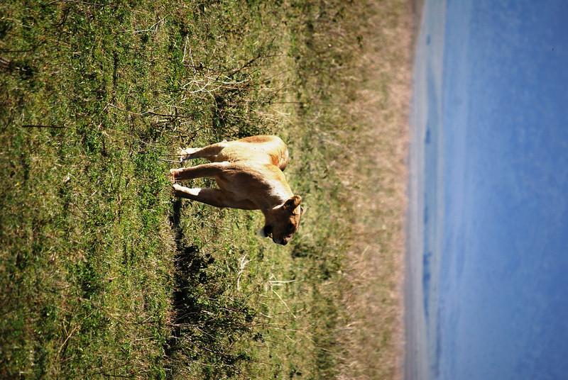 Ngorongoro (63).JPG
