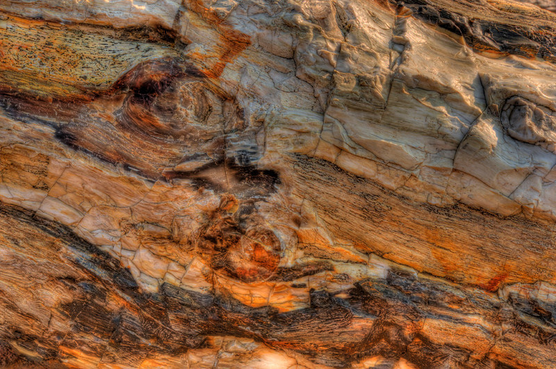 ginko_petrified_forest_16118_close_up-sm.jpg