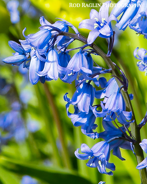 Blue on blue beautiful