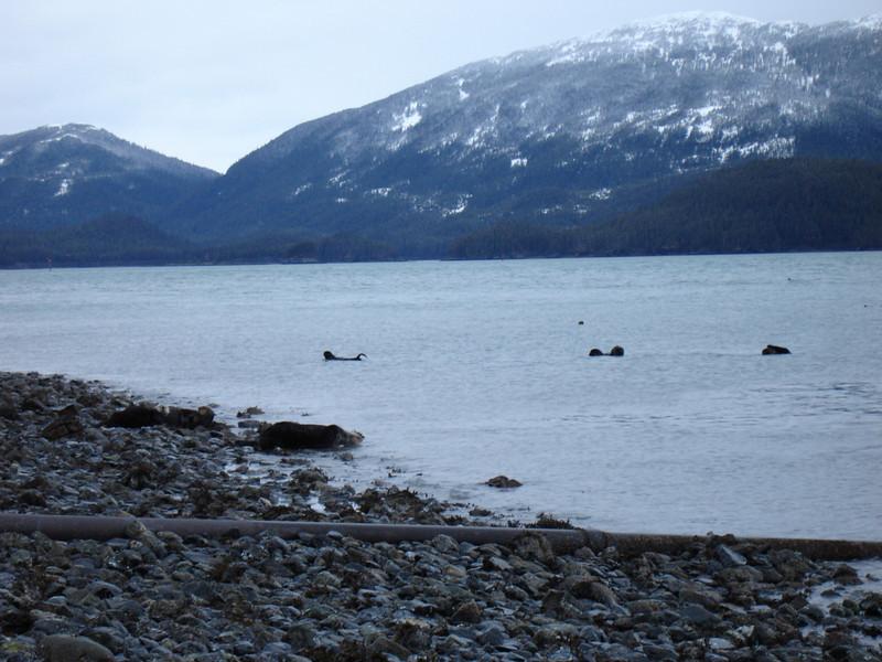 Alaska 2008 069.jpg