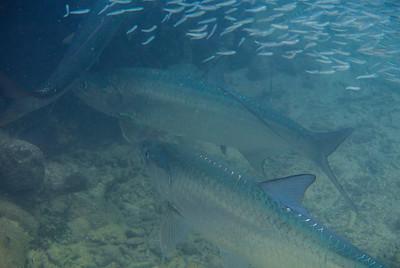 Florida Keys, September 2014