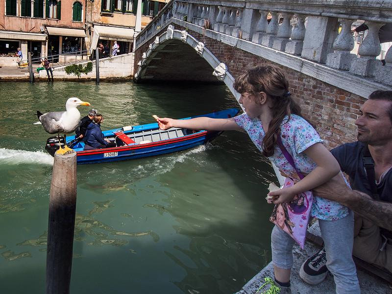 Feeding the Gull 14051880018.jpg
