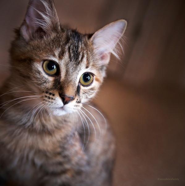 201292_cats0086.jpg
