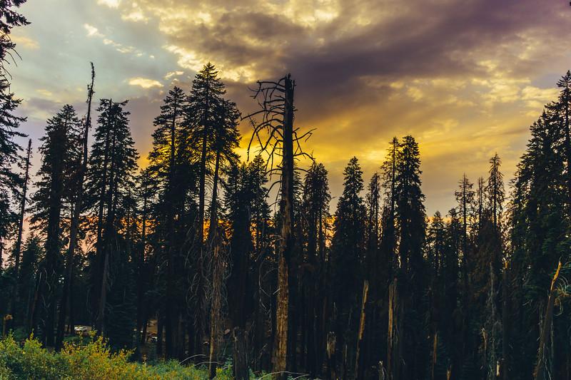 Rui in Sequoia-06985.jpg