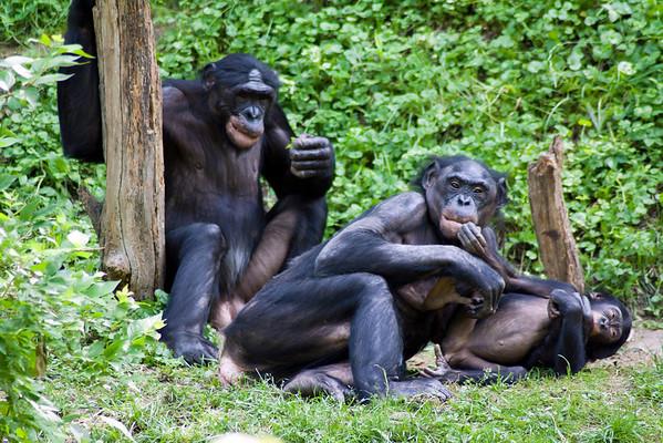 Animals: Parenting 3