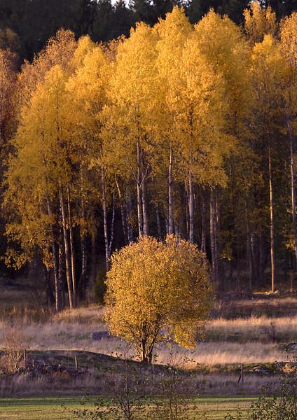 16_18_Oktober_503a_b_c.jpg