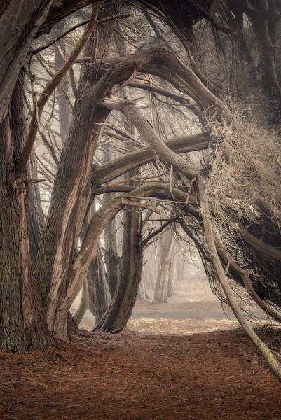 Cypress Arch, Sea Ranch, California
