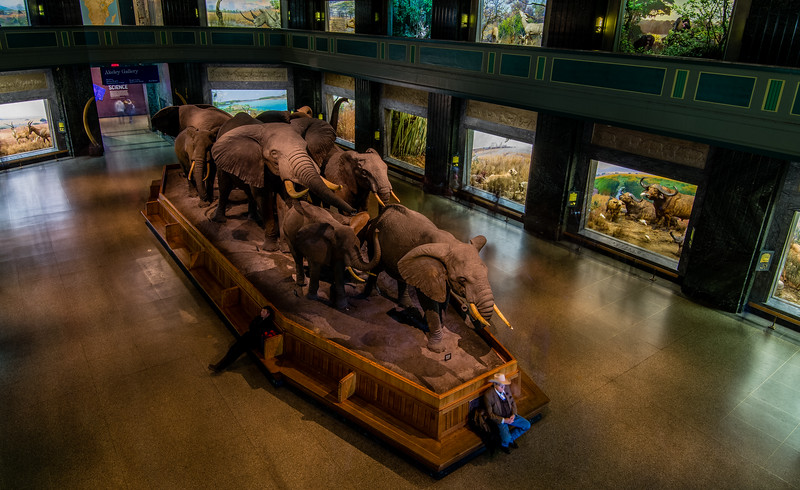 Waiting with the Elephants