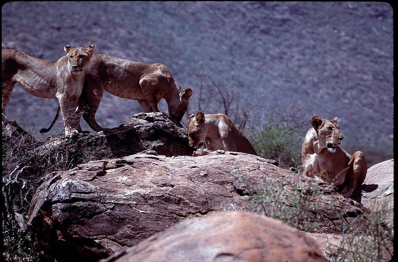 Kenya1_117.jpg