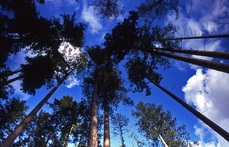 20-forest trees sky clouds.jpg