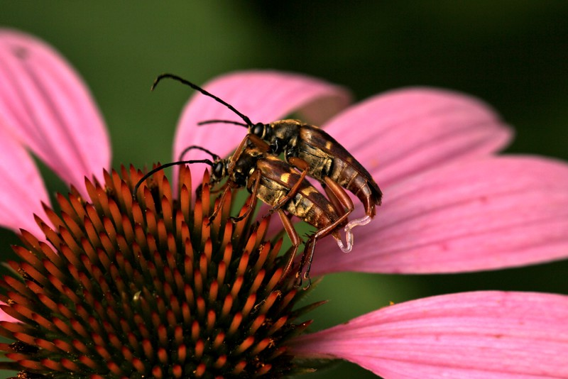 07-carolsim-a-bugs-irresistable_3_20141019_1998329975.jpeg