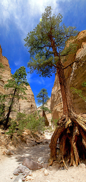 Tent Rocks Nat'l Monument formations. Near Santa Fe, NM.