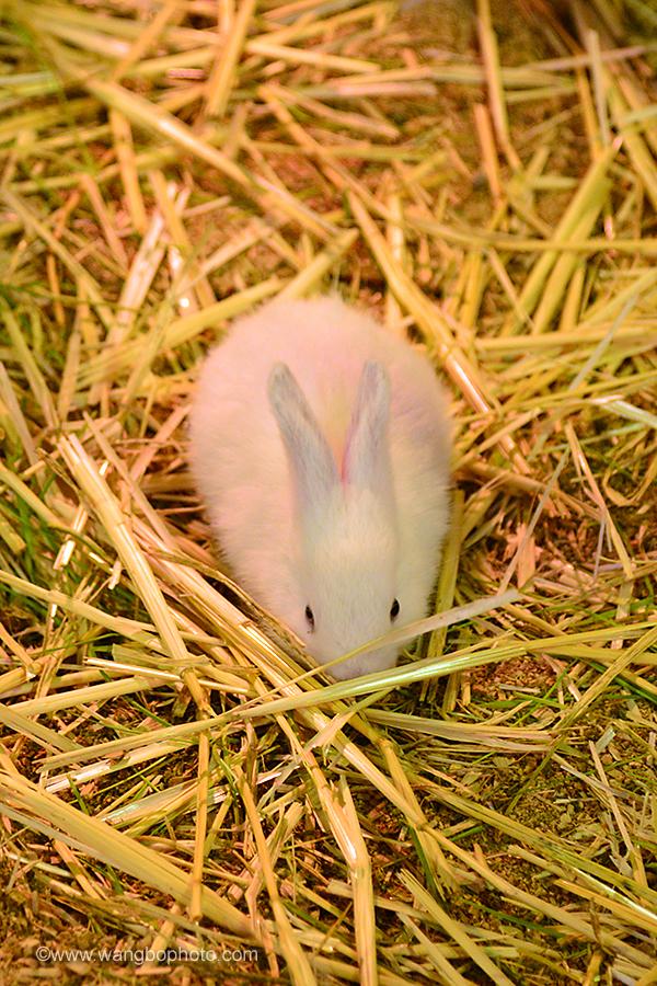 悉尼Easter Show之小动物 - 一镜收江南 - 清韵