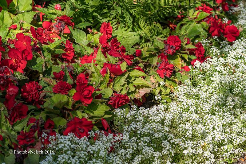 Don Egan's Flowers -148.jpg