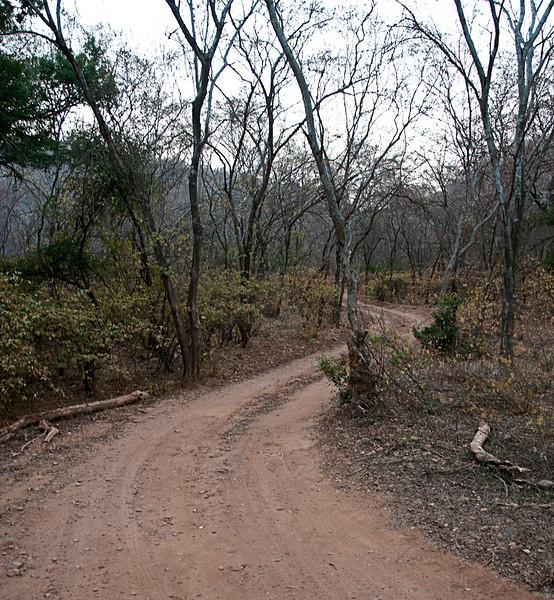 POW-Day 3 Sawi-Madhopur- DSC_2677-Ranthambhore National Park.jpg